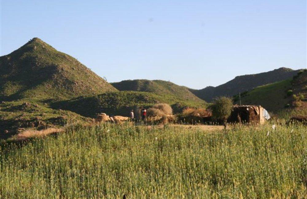 A small family farm near Tukul, Eritrea (UNMEE Photo: Ian Steele)