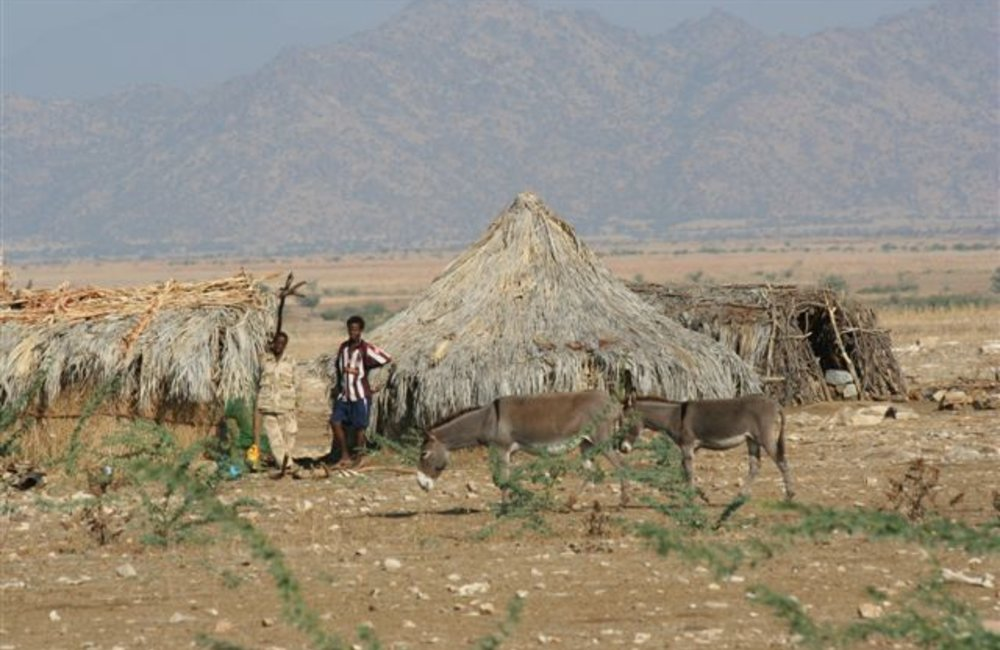 Eritrean Defence Forces camp near Maileba, Eritrea 28 November 2008 (Photo: Ian Steele)