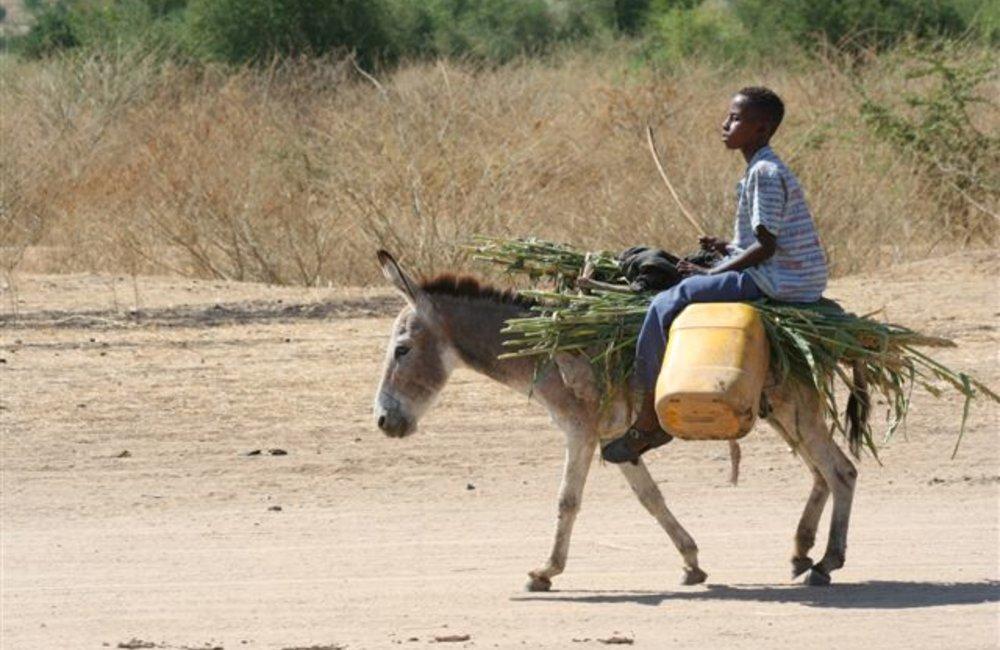 Local person passes the Sentry post at Maileba team site, Eritrea 28 November 2008 (Photo: Ian Steele)