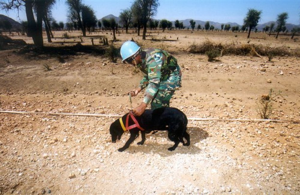Demining dog with Bangladeshi handler. UNMEE photo Jorge Aramburu